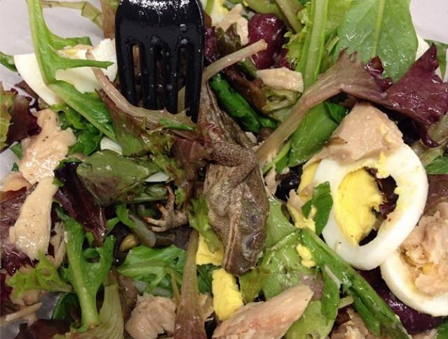 dead frog salad